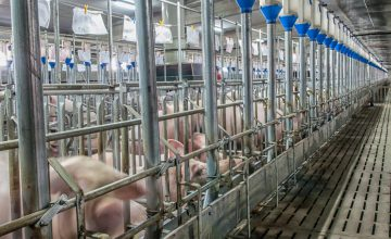 アフリカ豚熱侵入や新型コロナウィルス拡大を防ぐための業界各社が取り入れているバイオセキュリティ