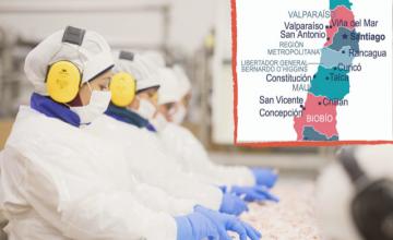 養豚産業はチリ経済における重要な役割を果たし国内に労働の機会をもたらす
