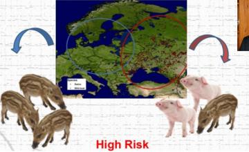 """加强农场""""生物安全""""措施以防止非洲猪瘟进入的重要性"""