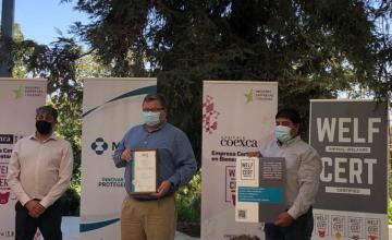 コエクサ社Coexca S.A. およびその養豚施設が動物福祉の認定を受ける